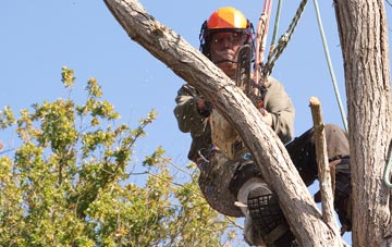 finding qualified Halifax tree surgeons