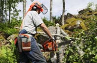 Halifax tree removal services